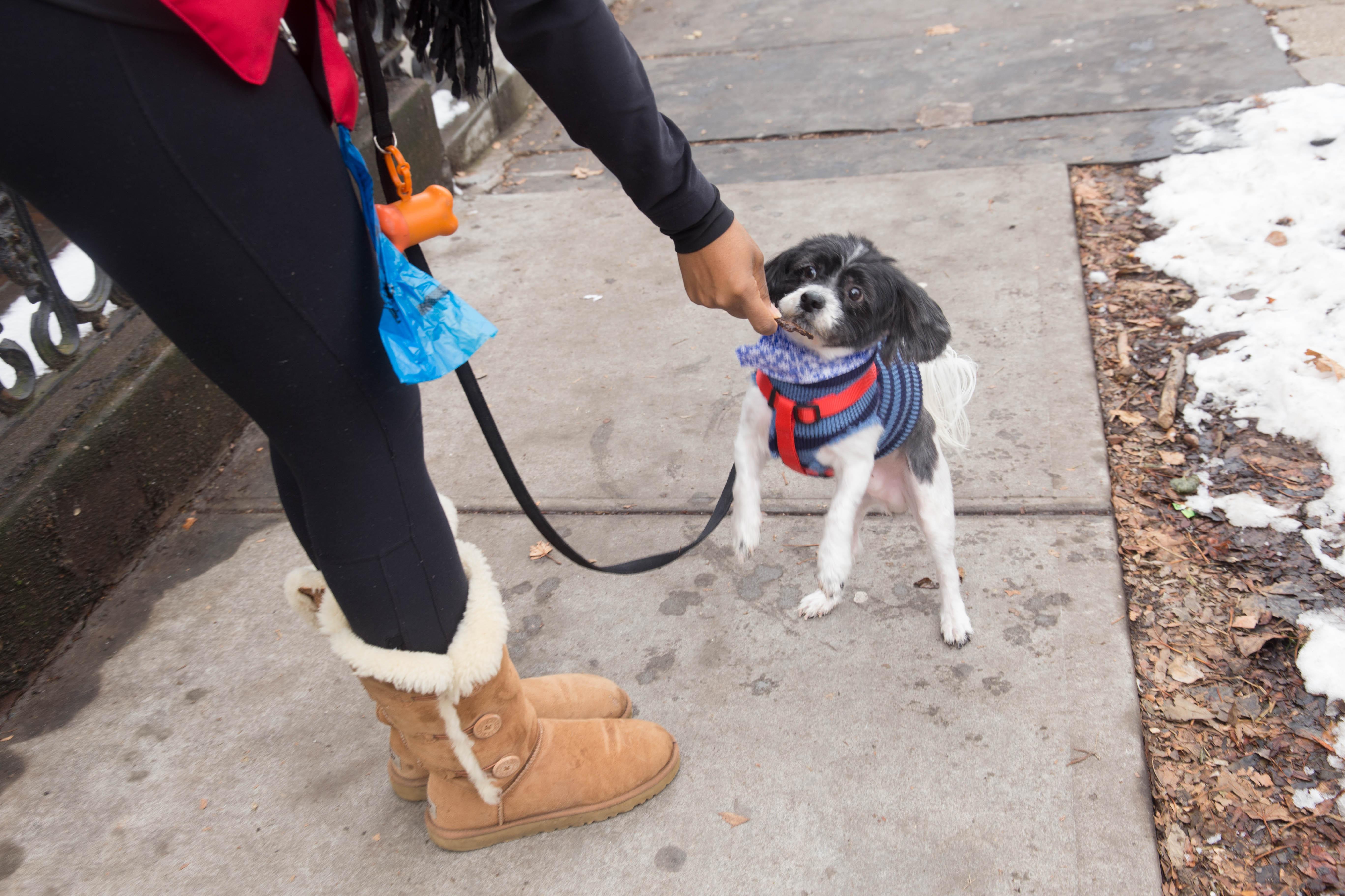 Dogipack mommyrandr valerie pierre